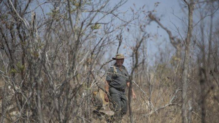Afrique du Sud – Un braconnier piétiné par un éléphant avant d'être dévoré par des lions