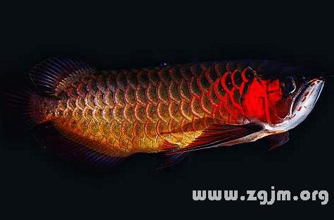 夢見魚代表財運還是性慾?_周公解夢_周公解夢大全
