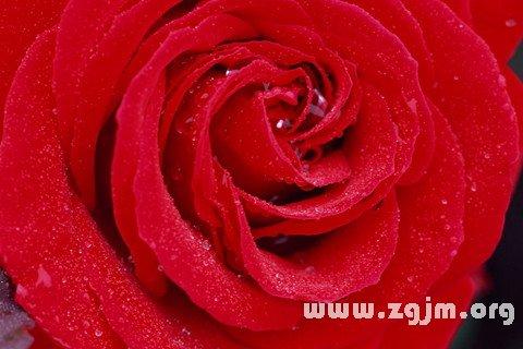 夢見紅色_周公解夢夢到紅色是什麼意思_做夢夢見紅色好不好_周公解夢官網_周公解夢大全