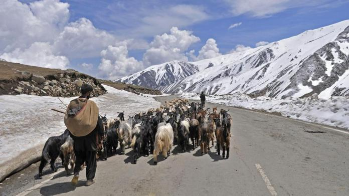 In Kashmir, nomads battle cow vigilantes to keep alive traditional ...