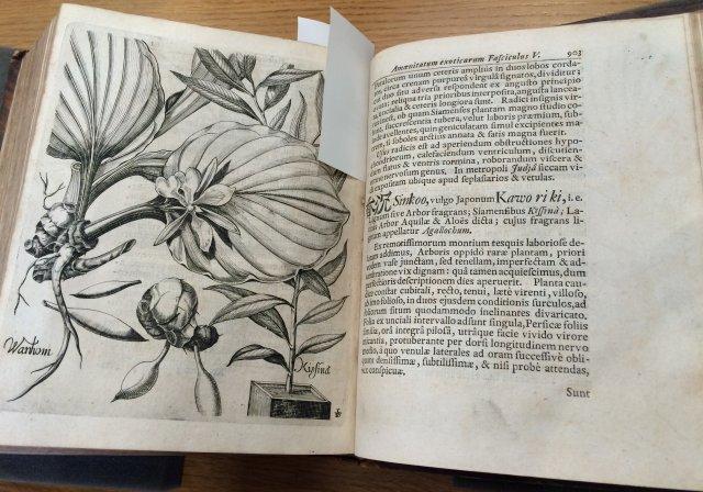 Osiemnastowieczny atlas botaniczny; po prawej stronie pierwszy w Europie opis miłorzębu japońskiego.