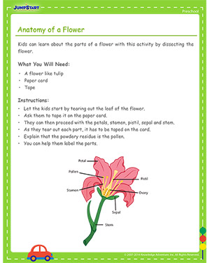 parts of a plant diagram worksheet 2000 honda civic cooling system anatomy flower | preschool science activities jumpstart
