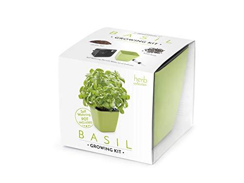 Domestico Kit de ALBAHACA para cultivar, Basil Growing Kit,