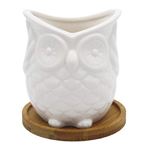 Ceramic Owl Succulent Planter w/ Drainage Tray