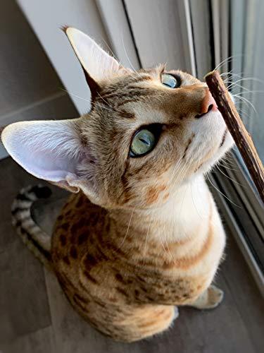 Meowy Janes Matatabi Chew Sticks - An All Natural Silvervine Cat Toy and Cat Treat - Catnip Alternative