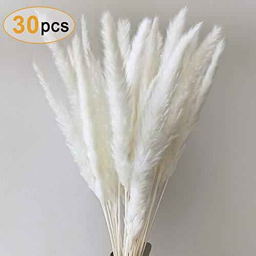 Sporgo Pampasgras, Natürliche Pampasgras Getrocknet Pampas Gras Phragmites Trockenblumen Blumenstrauß Deko für Hause Wohnzimmer Inneneinrichtungen Fotografie Hotel Hochzeit 60CM (Weiß)