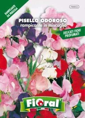 Sementi da fiore di qualità in bustina per uso amatoriale (PISELLO ODOROSO RAMPICANTE IN MISCUGLIO)