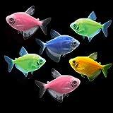 GloFish Live Fish Collections (Tetra Basic)