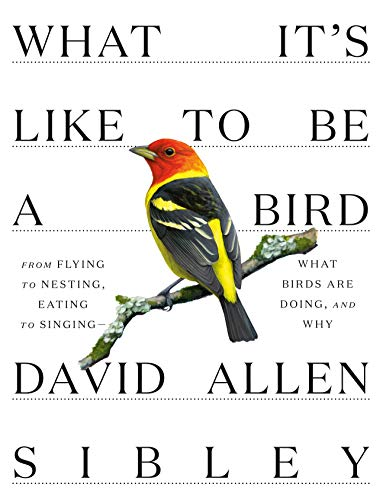 What It's Like to Be a Bird: From Flying to Nesting, Eating to...