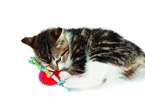 Petstages Dental Kitty Chew Wheel Catnip Cat Toy