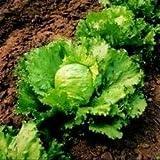Seekay Laitue 'Salade' Environ 800 Graines Iceberg / Tête Croustillante