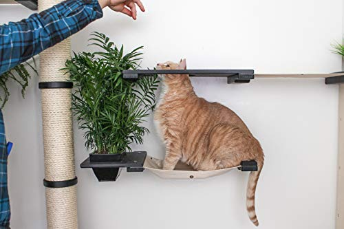 Cat | CatastrophiCreations Cat Mod Garden Complex Handcrafted Wall Mounted Cat Tree Shelves with Planter for Cat Grass, Unfinished/Black, One Size, Gym exercise ab workouts - shap2.com