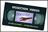Dissection and Anatomy of the Crayfish (Explains Characteristics of These Arthropods) VHS VIDEO