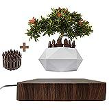 JU&MU Macetero Flotante para bonsi y bonsi, Soporte magntico Flotante para el hogar, Escritorio, decoracin de macetas y macetas de casa y jardn (Madera Oscura)