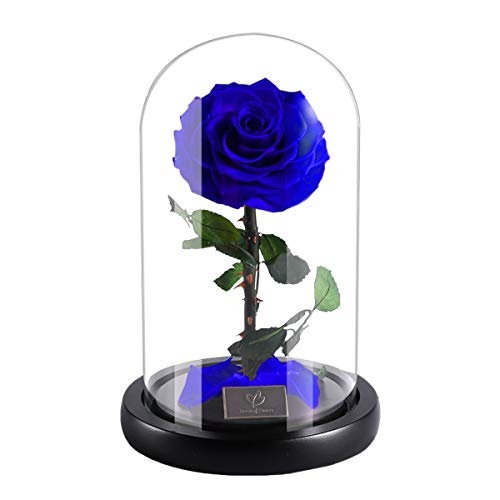 Beauty and The Beast Handmade Preserved Rose With Real Fallen Petals, in Luxury Glass Dome Gift, Best Gift for Her, Mothers Day Valentine's Day Wedding Anniversary