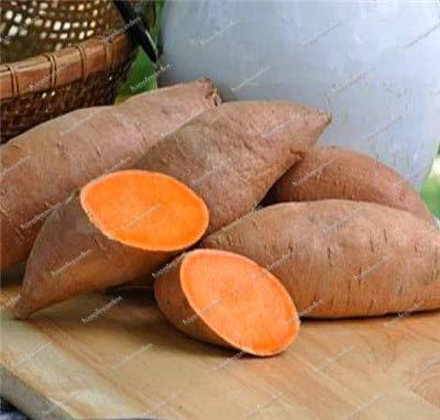 Sump Fresh 100pcs Boniato Hortalizas SEMILLAS para plantar M