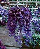 Rara semilla de flor colorida planta trepadora de hoja perenne de la rota al aire libre Fcil Grow Bonsai Colgando planta de la cesta Los ms populares 50 PC 6