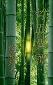 Taketori itan (ấn bản tiếng Nhật)