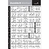 NewMe Fitness Dumbbell 18x27 Workout Exercise Poster - Strength Training Chart - Home Gym Weight Lifting Routine - Body Building Guide (Vol 1)