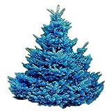 Semillas para jardinera, 20 unidades adaptables Colorado Sky Blue Spruce Hardy Picea Pungens Glauca Tree Seeds