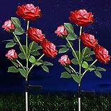 Solar Rose Flower...image