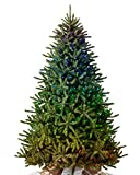 Balsam Hill - Amazon Exclusive - 7ft Premium Pre-Lit Artificial Christmas Tree Classic Blue Spruce with LED Twinkly Light Show Includes Storage Bag, and Fluffing Gloves