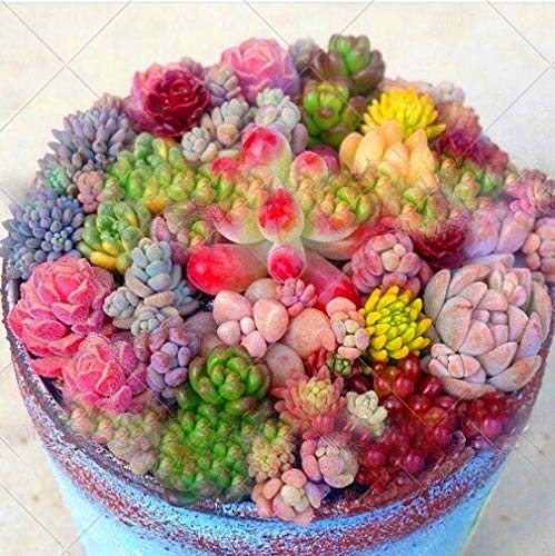 Mixed Colored 200pcs/bag Rare Beauty Succulents Seeds Garden and Home...