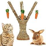 Xinstroe Bunny Chew Toys, Rabbit Cat Hamster escalade Arbre...