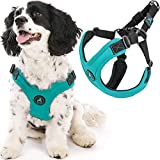 Gooby Escape Free Sport Harness - Turquoise, Large - No Pull Step-in Patented Neoprene Small Dog Harness, Four-Point Adjustment - Perfect on The Go Dog Harness for Medium Dogs No Pull and Small Dogs