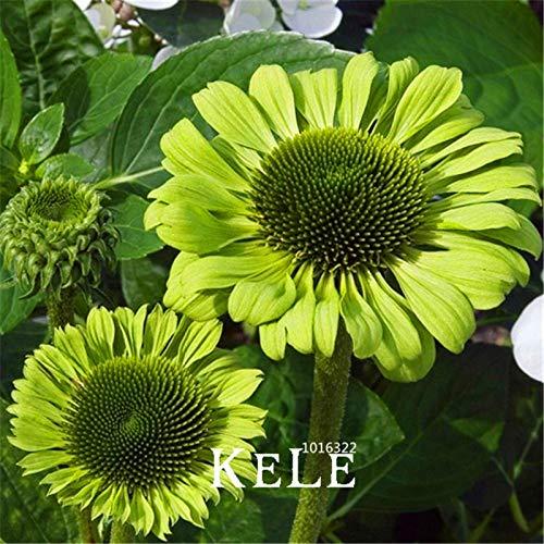 種子パッケージ:!ビッグ推進エキナセア・グリーンジュエル盆栽、部屋の庭の種子100個/ロット、レアグリー...