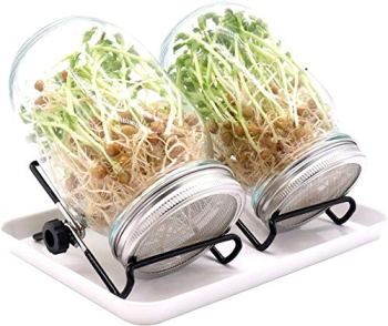 2 Kit Seed Sprouting Jar, Premium Mason Jar Sprouts Set Include 2 Glass jar 33.8 oz, 2 Anti-Slip Stand, 2 Aluminum Cap, 1 Large Tray, Sprout Starter Kit for Growing Bean Sprouts by Y.A. LOTUS