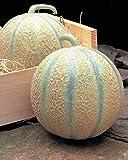 Risitar Graines - Rare Melon Rubens F1 précoce grande saveur, juteux et très...