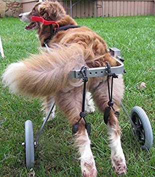 Adjustable Dog Wheelchair (M), Weight 40 to 60 lbs, Hip Height 16'-20', hind Legs Rehabilitation