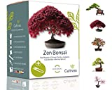 Cultivea Mini - Kit de 5 Bonsi para cultivar - Semillas de calidad - Jardn - Idea de regalo (Arce rojo, Cercis chino, Juniperus, Liquidambar, Pcea de Noruega)