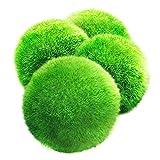 Luffy Medium Marimo Moss Balls, 1 pulgada, plantas vivas para mascotas acuticas, bajo mantenimiento, 4 bolas por paquete