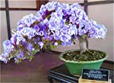 Bloom Green Co. 100 Unids Exticos Azalea Bonsai Japonesa, Azalea Rododendro Mixta, Azalea Flor Bonsai rbol Diy Seedssplant Para Jardn De Su Casa: 1