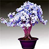 Bloom Green Co. 100 Unids Exticos Azalea Japonesa Bonsai, Azalea Rododendro Mixta, Azalea Flor Bonsai rbol Diy Seedssplant Para Jardn De Hogar: 7