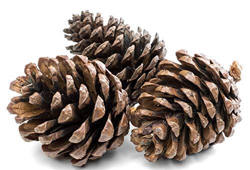 Floralcraft Guirnalda de Conos de Pino Natural de 1 kg de Color para decoración de Navidad