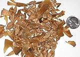 Paquete de semillas Cedro del Atlas de Bonsi, Cedrus atlantica Semillas ideal para Bonsai 25
