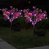 Doingart Solar Phalaenopsis...image