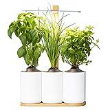Lilo, le potager d'intérieur autonome de Prêt à Pousser - Nouvelle Generation - Cultivez toute l'année simplement - Inclus Basilic, Menthe et Ciboulette