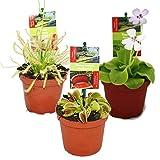 Dionaea + Nepenthes + drosera+ pinguicula + 4 plantas carnvoras