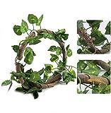 HEEPDD Vignes de Reptiles, Branche d'escalade de Reptiles...