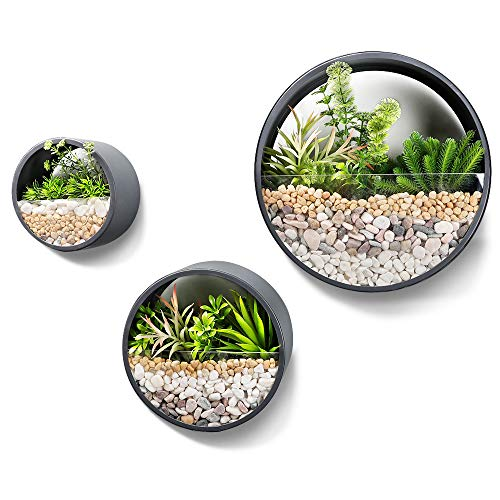 Worth Garden Set of 3 Wall Planters,Modern Indoor Round Glass...