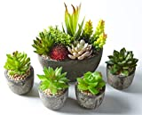 Jobary Ensemble de 5 pots artificiels succulents (comprenant 10 plantes), Faux...