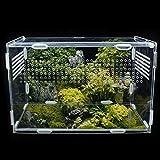 Magent Boîte d'alimentation D'insectes Terrarium Phasme...