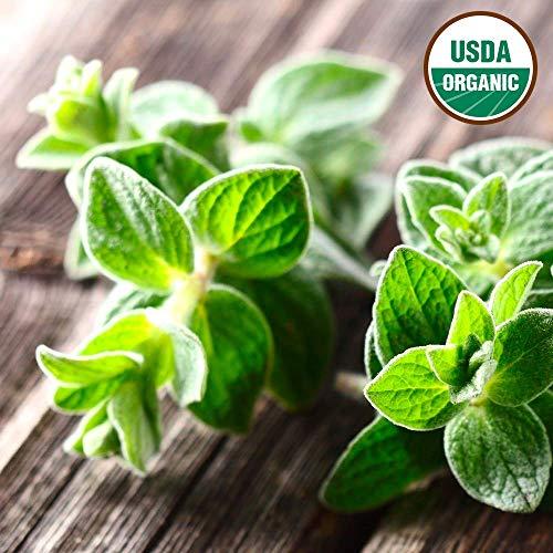 Gaea's Blessing Seeds - Italian Oregano Seeds 500 Organic Non-GMO Seeds Origanum Vulgare 85% Germination Rate 110mg