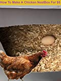 How To Make A Chicken NestBox For $5