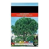 Semillas de Pino Pionero 30 Semillas Vivas de Pinus Pinea rbol Pias