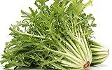 120 Graines de Chicorée Frisée - jardin potager légumes méthode BIO